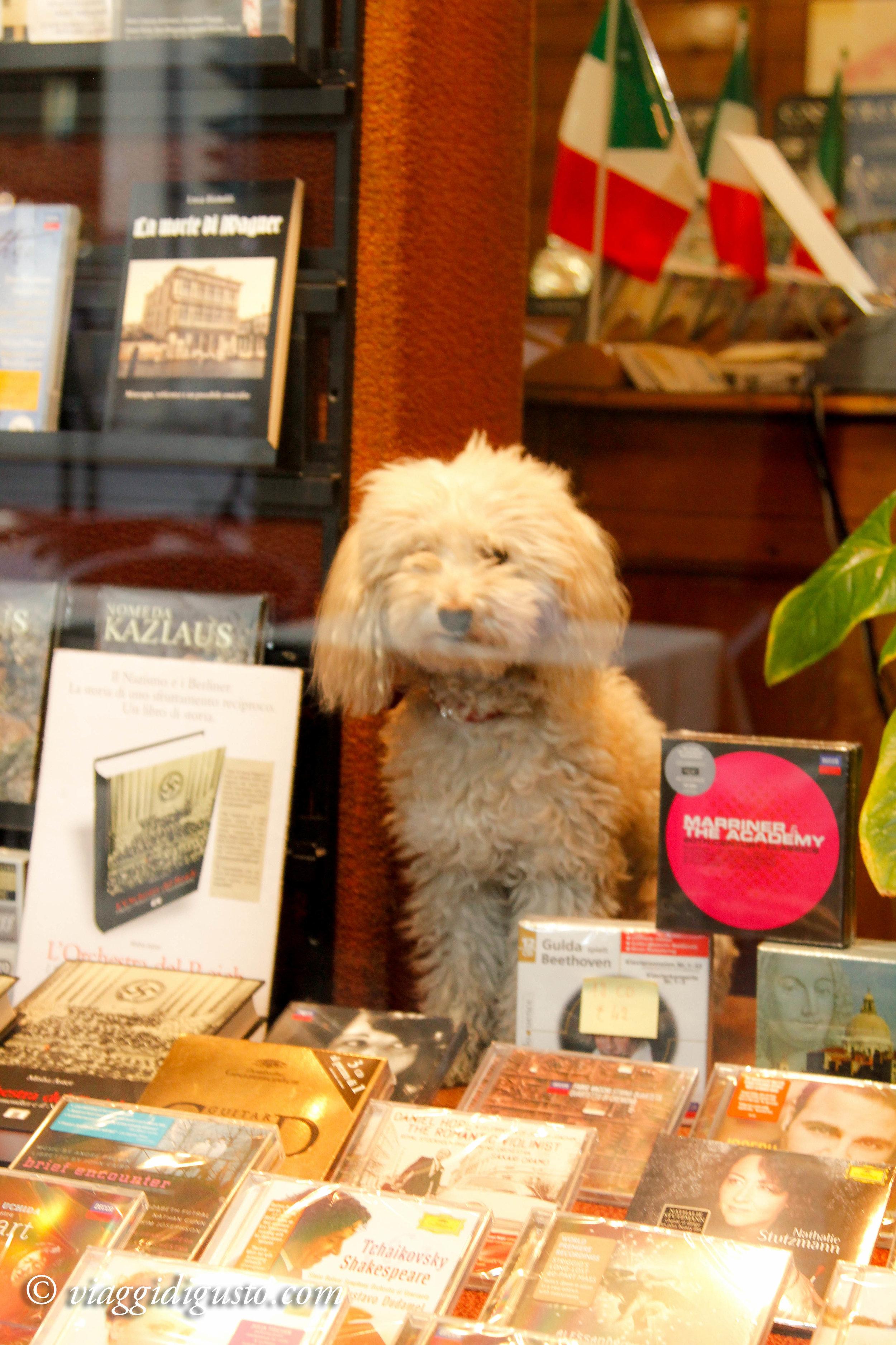 dog bookstore.jpg