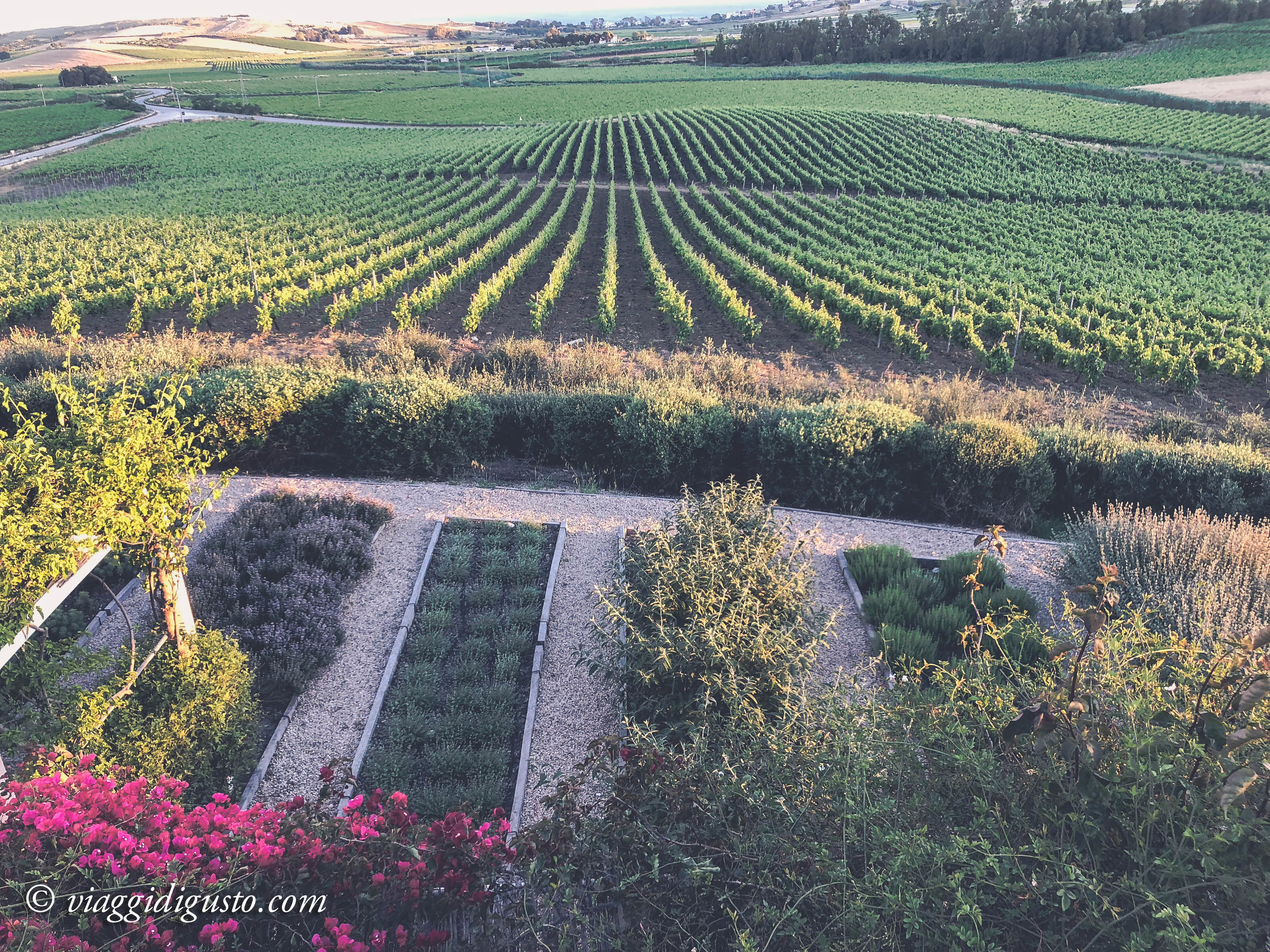 Herb gardens and vineyards at La Foresteria.