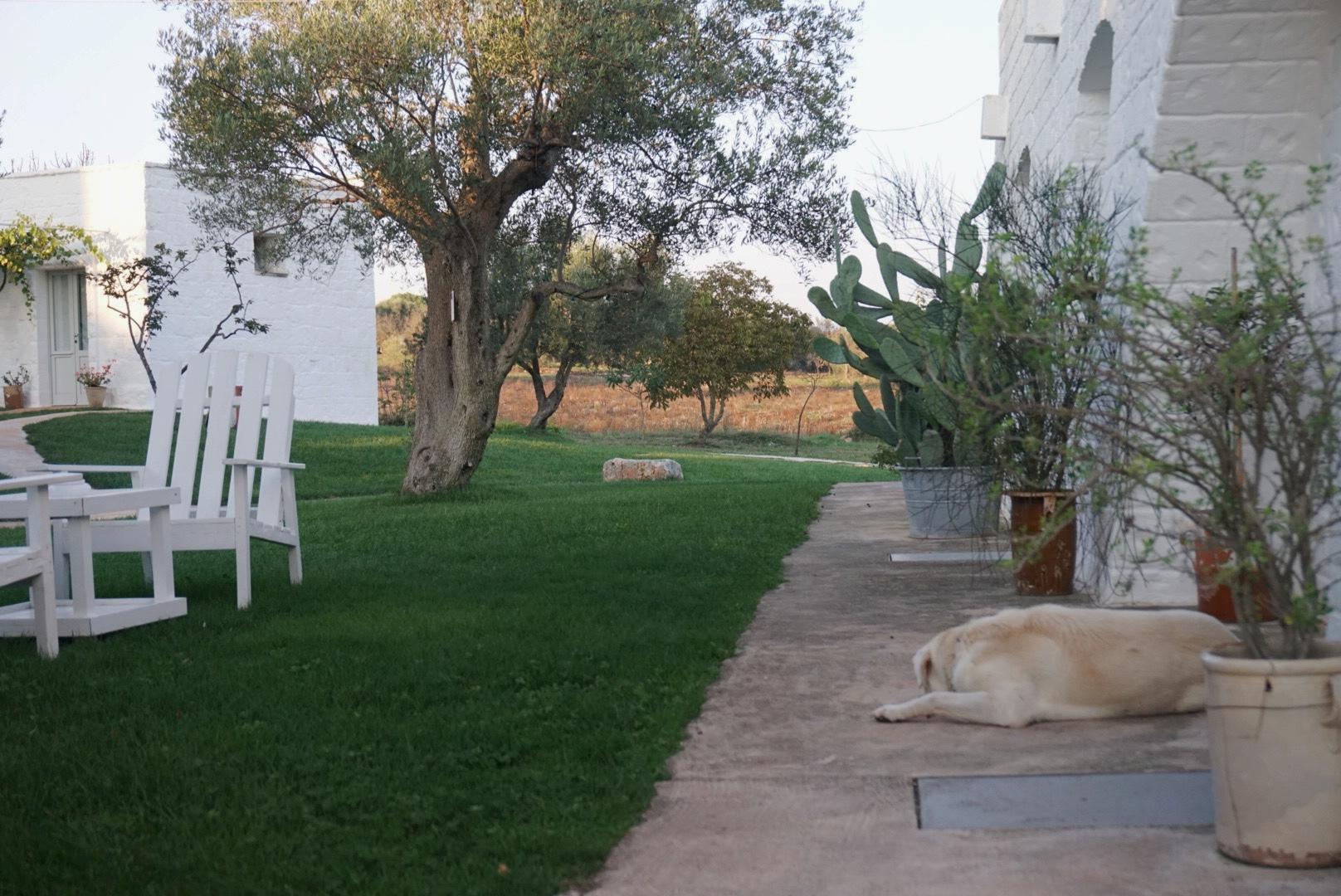 RESIDENT PUP AT masseria cervarolo, puglia