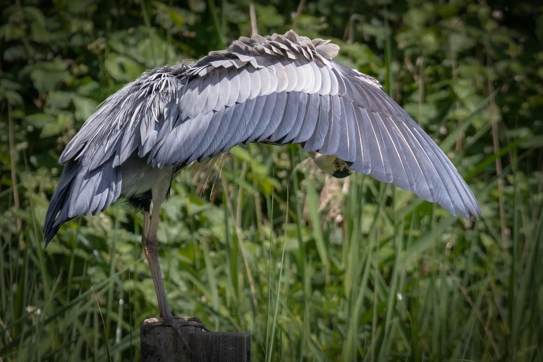 Heron Umbrella