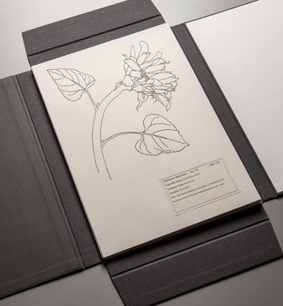 Lou Cabeen, Herbarium Martyrium
