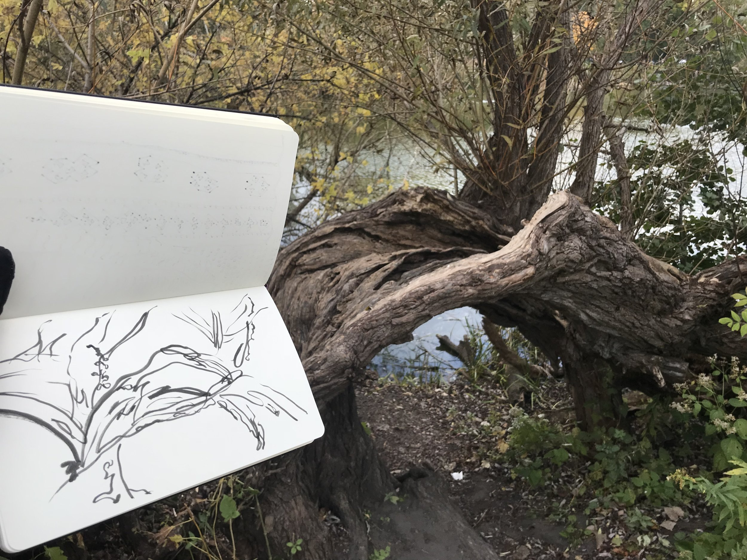 kate lewis art.tree sketch and photo.jpg