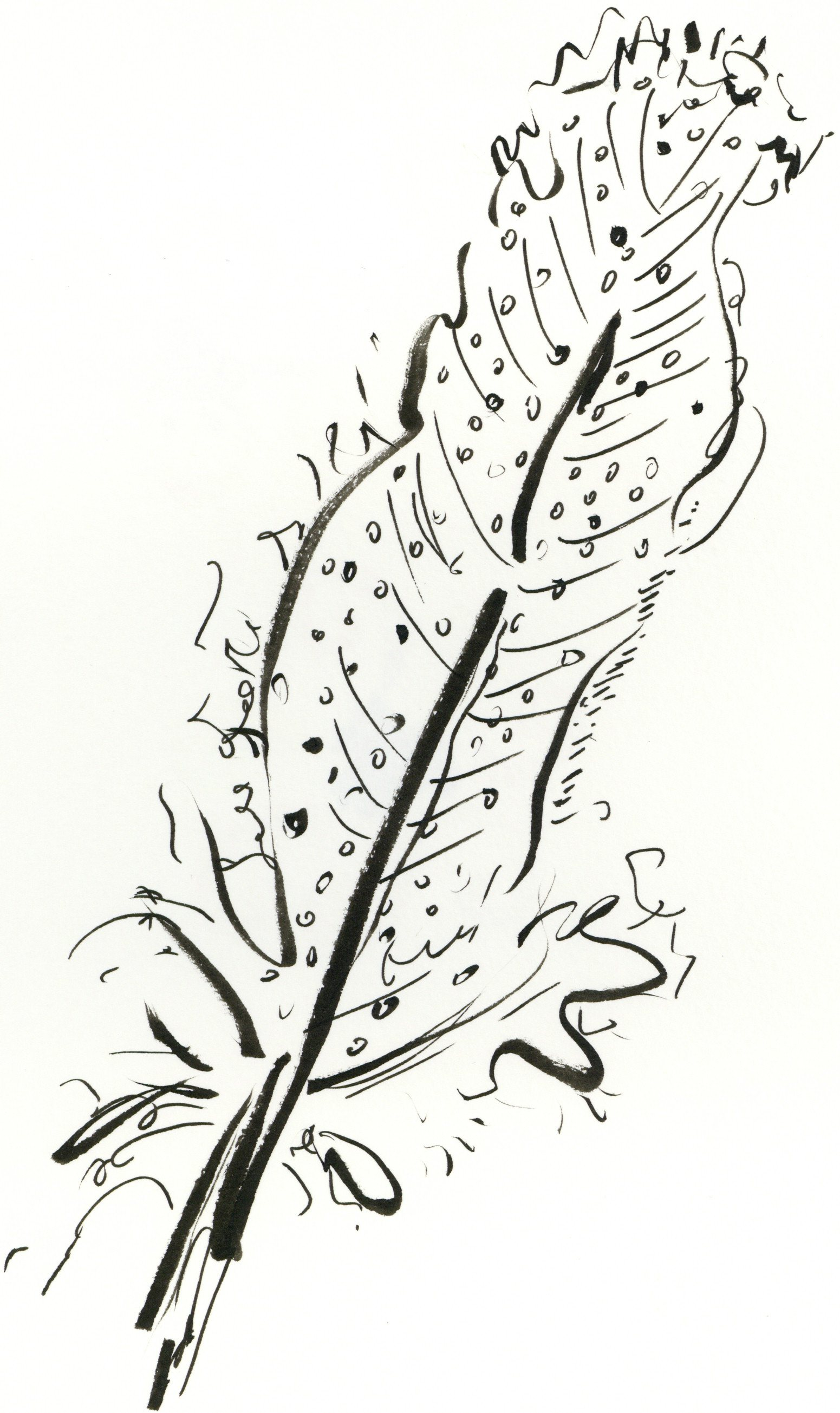 kate lewis art.feather sketch.JPG