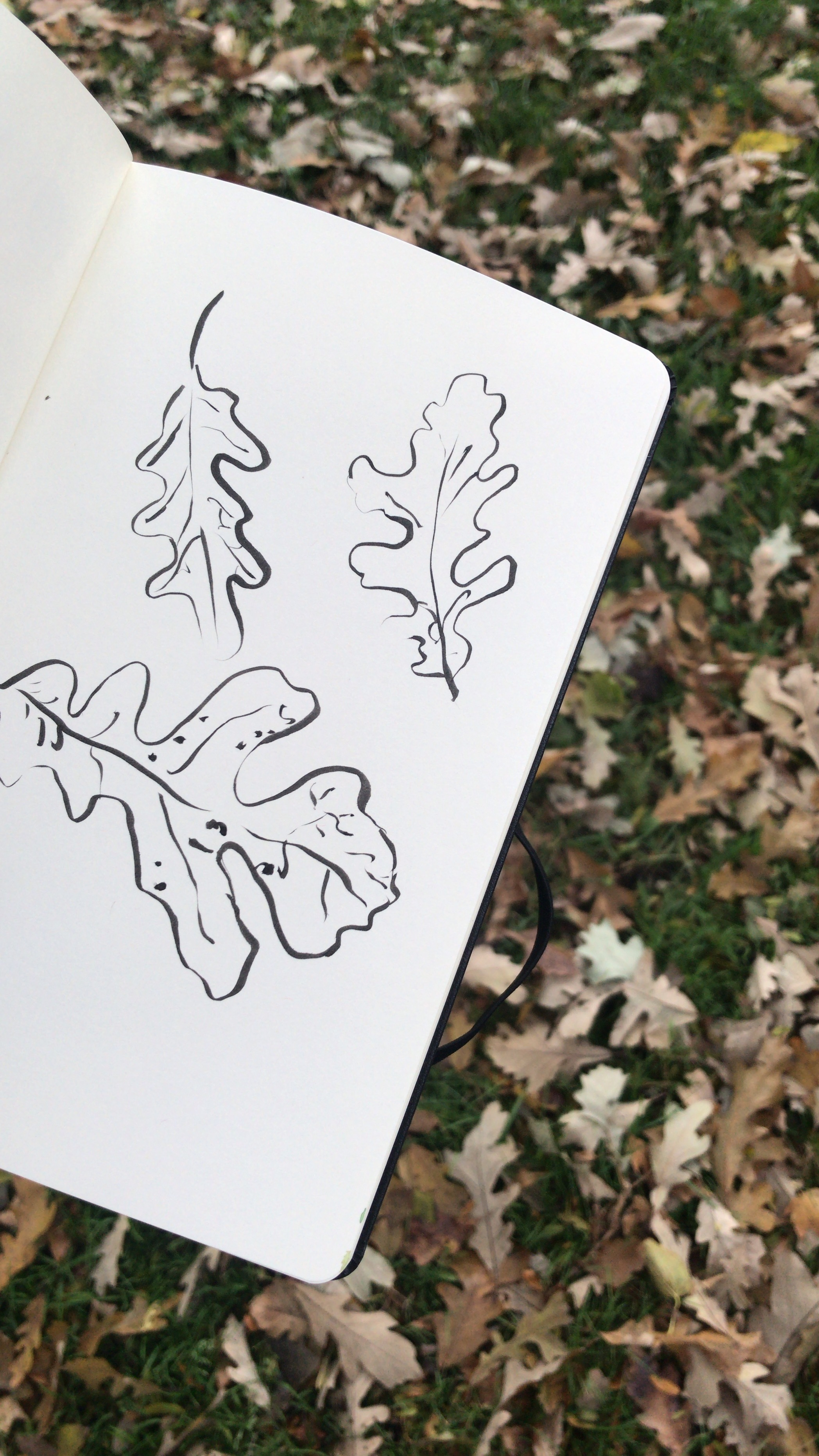 kate lewis art.fall leaves drawing.JPG
