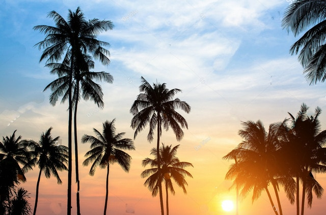 Silhouettes-palm-trees-against-sky-during-tropical-sunset-backdrops-Vinyl-cloth-High-quality-Computer-print-party.jpg_640x640.jpg