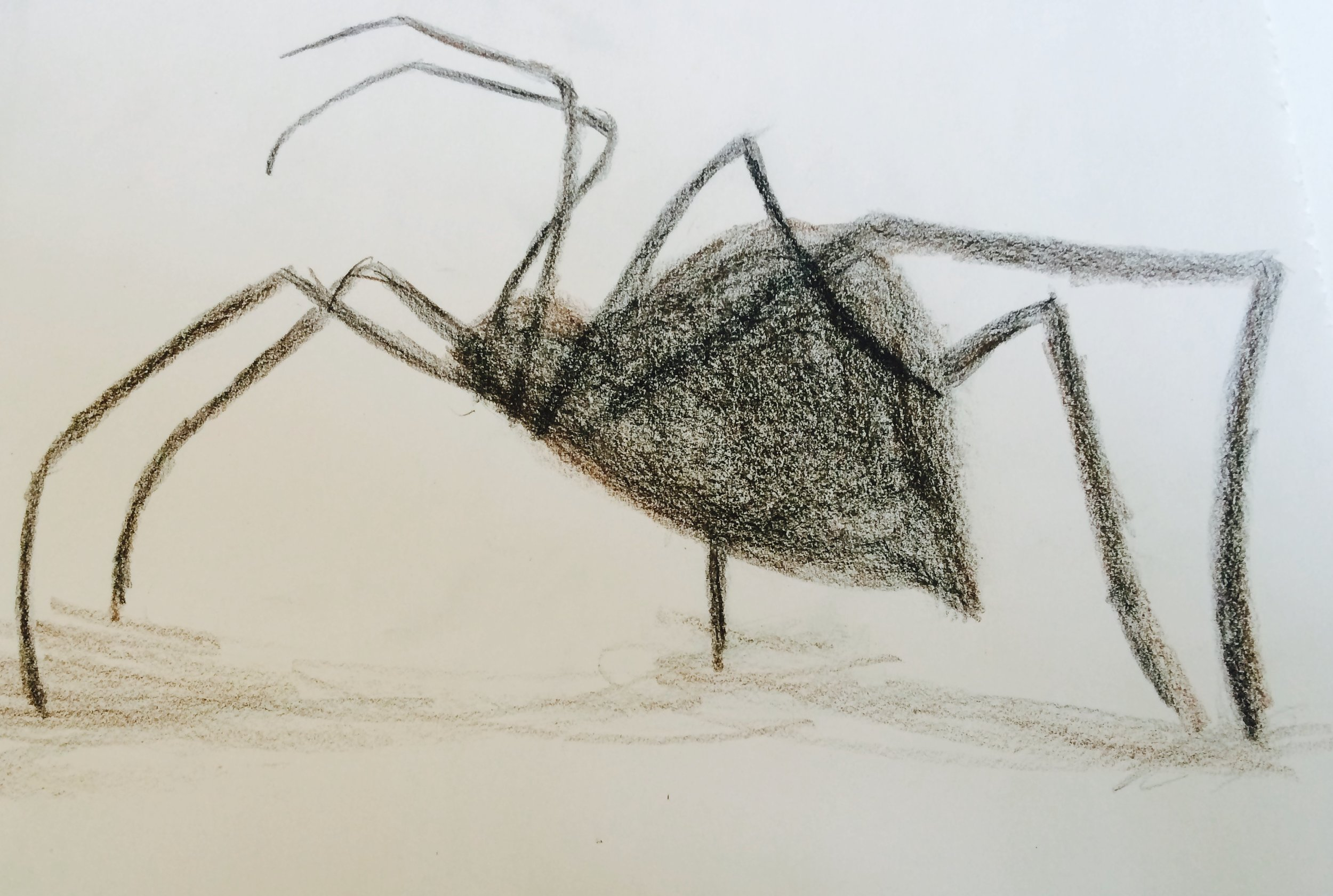 simple spider prismacolor sketch by dreadful jonquil
