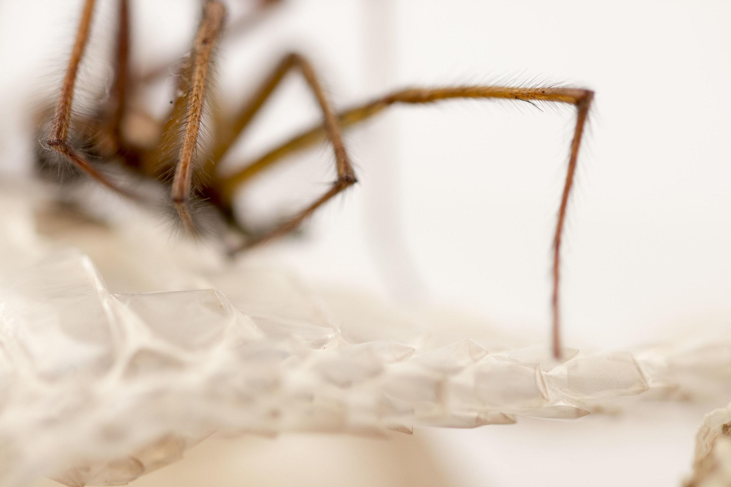 Spider exoskeleton & Snake shed