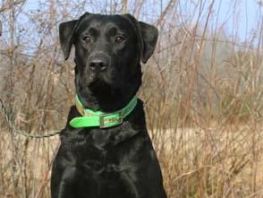 Sporting Life Dogs - Aspen