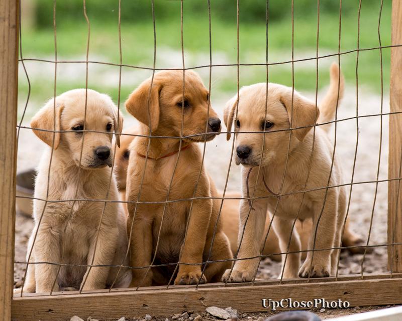 Puppy_sel_096_SLK2012_w.jpg