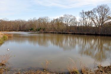 Big-pond.jpg