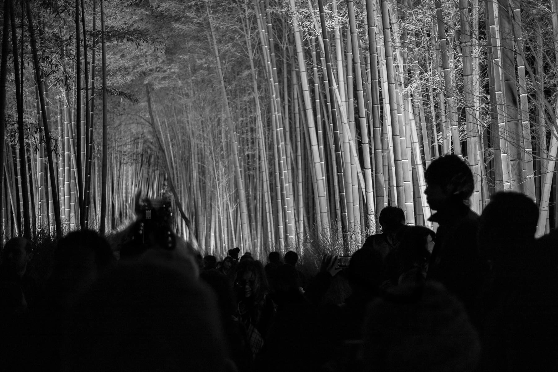 Bamboo Nights
