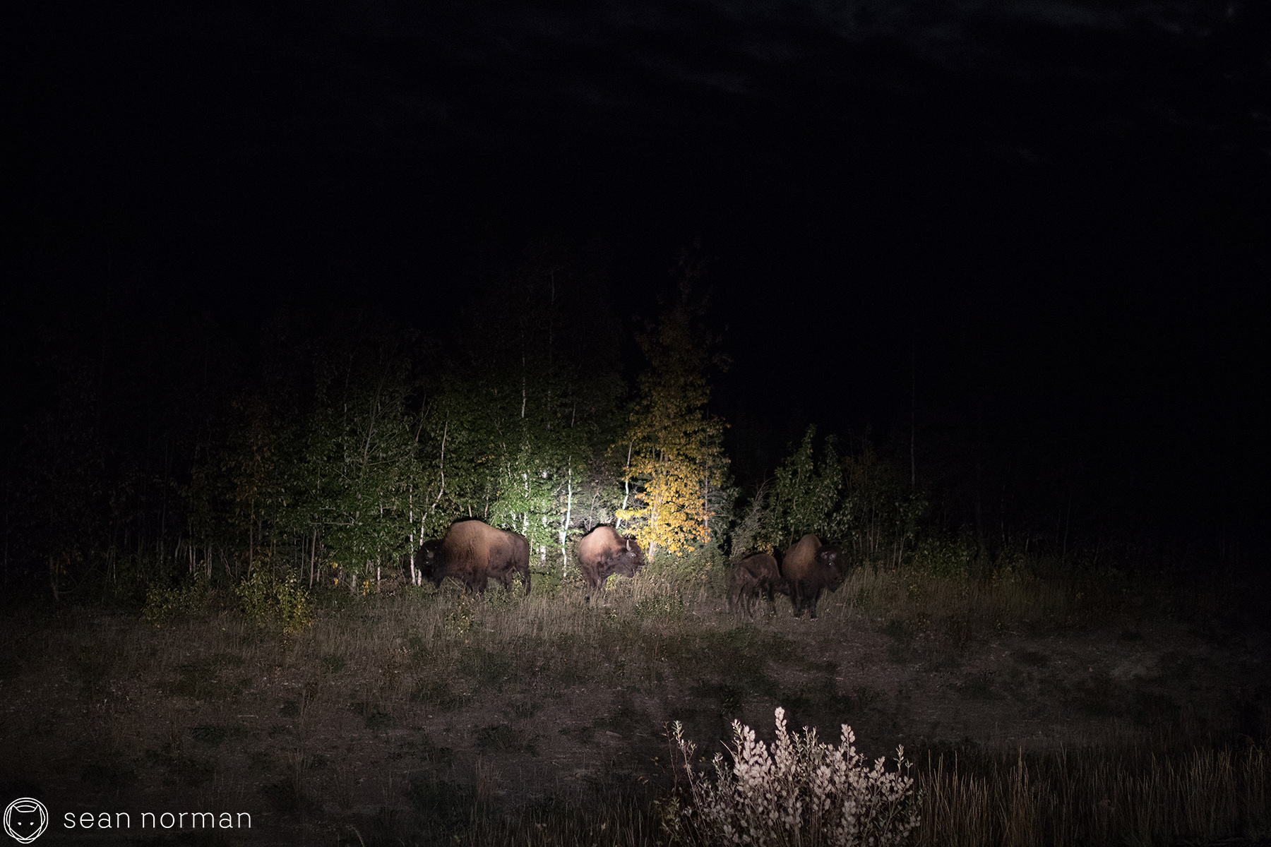 Yellowknife Bison Sanctuary - 1.jpg