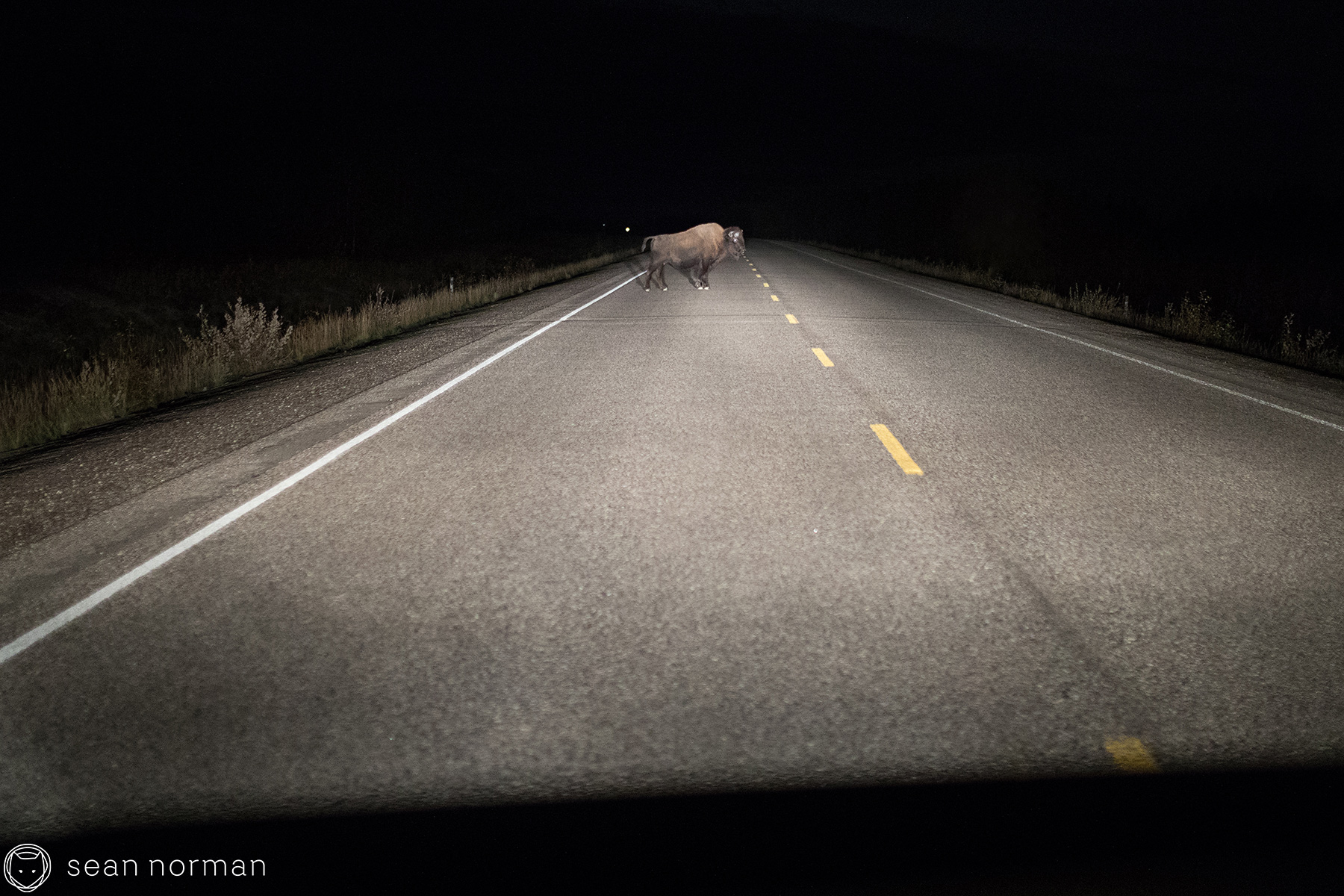 Yellowknife Bison Sanctuary - 2.jpg