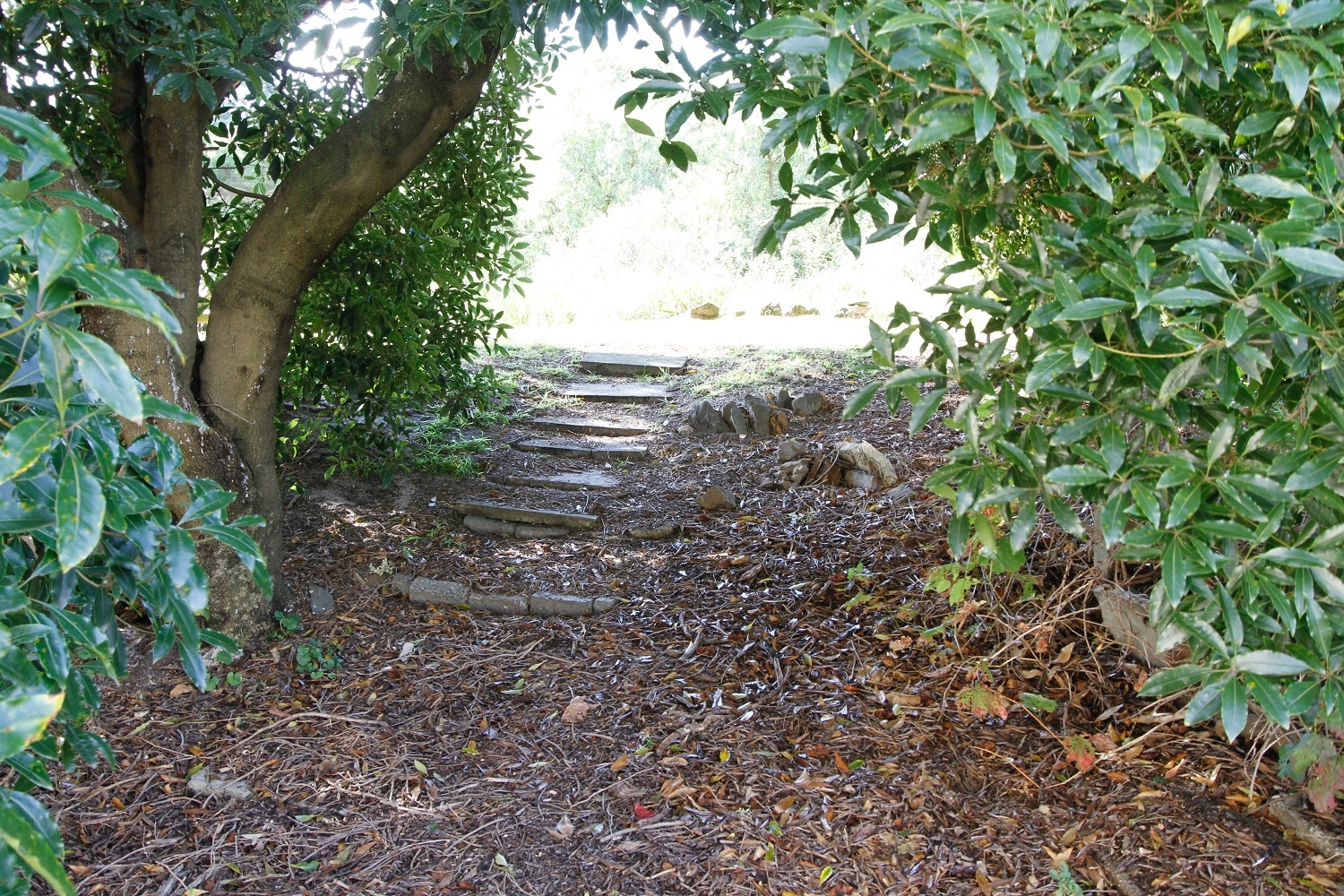 Pathway in the grounds.