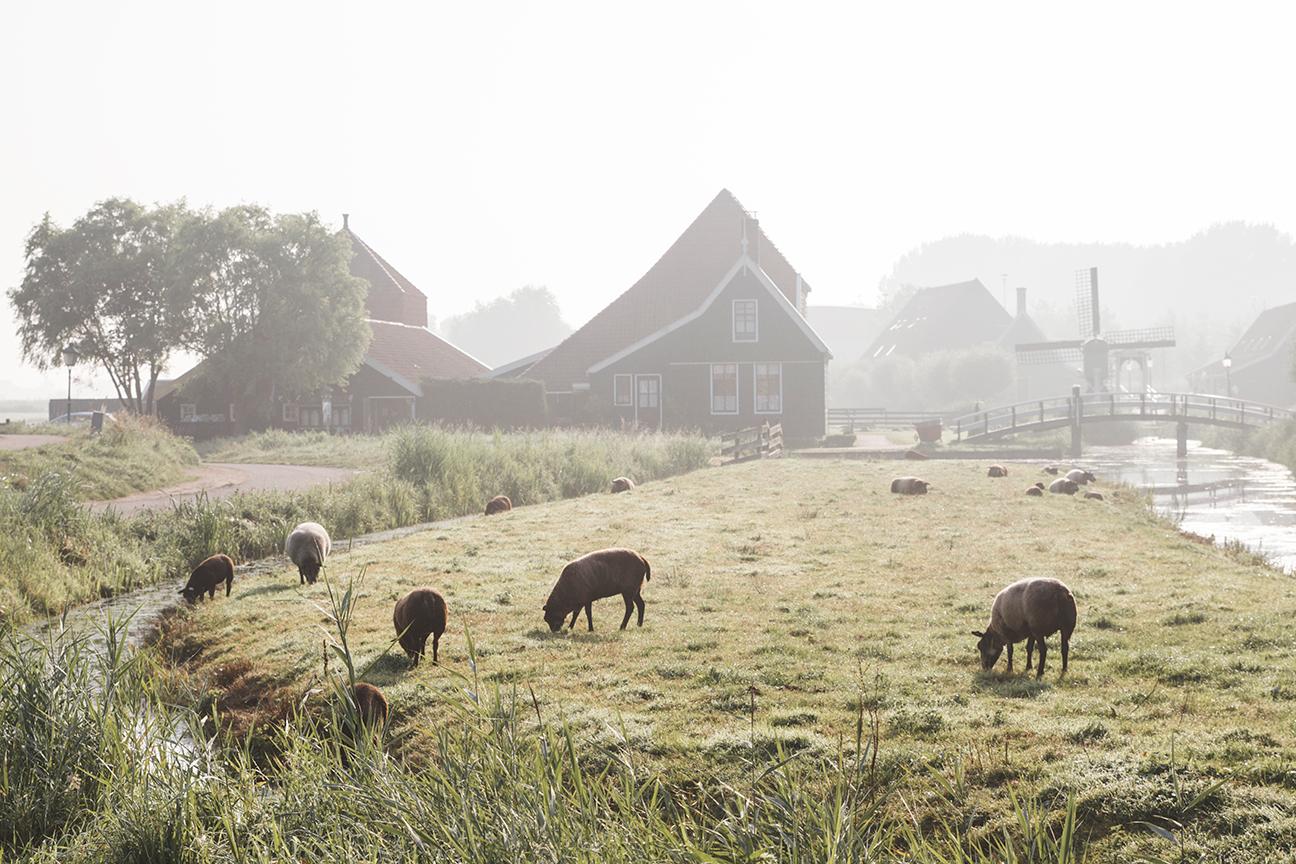 Netherlands_293.jpg