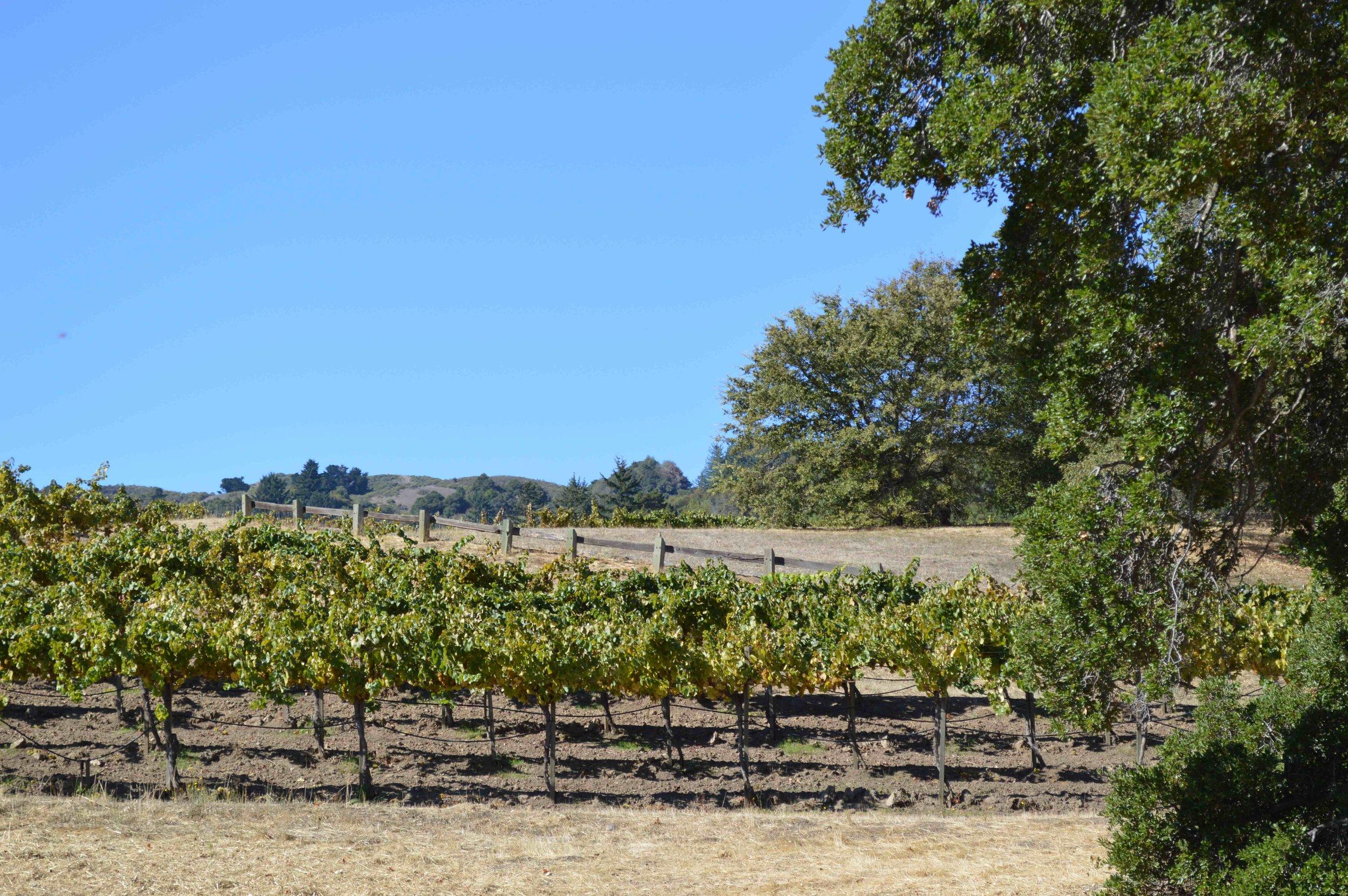 Spring Ridge Vineyards Oct 2013.jpg