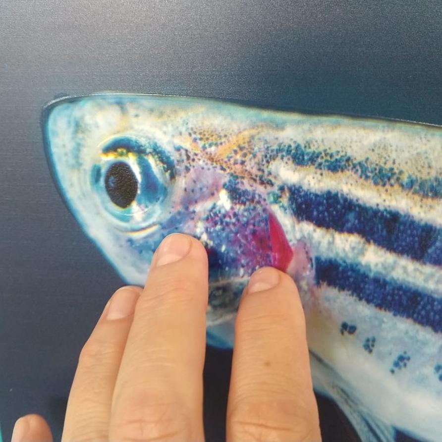 Zebrafish-WG-000.jpeg