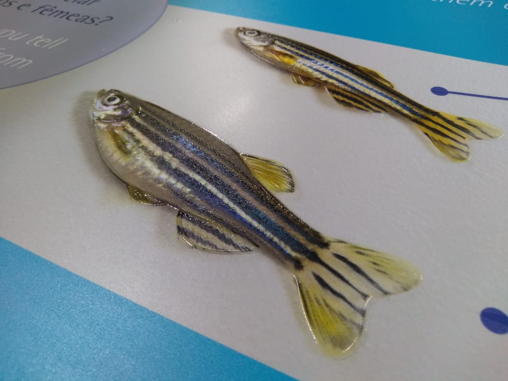 Zebrafish-WG-002.jpeg