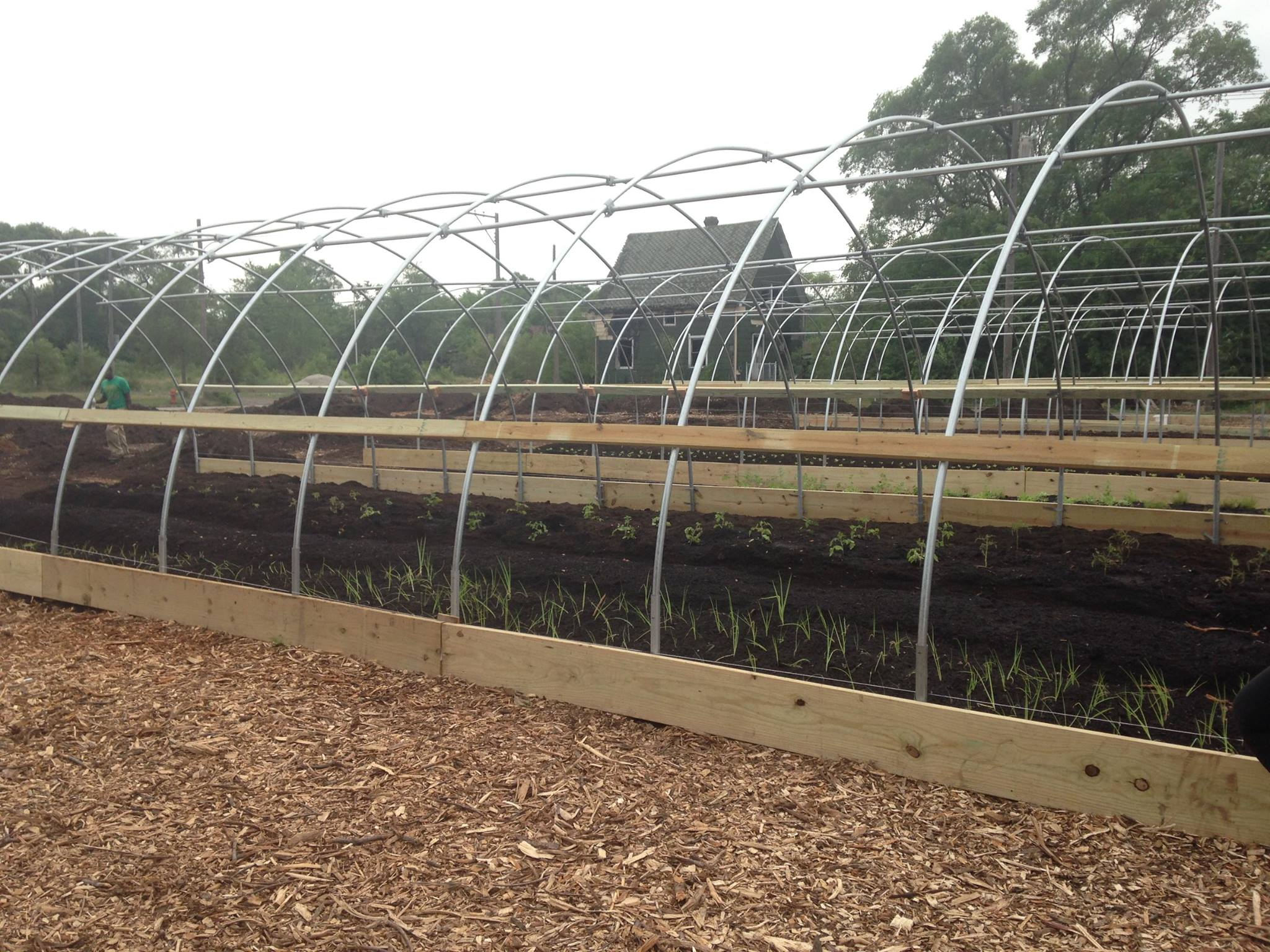 Day 4: Hoop houses have been erected, seedlings and seeds have been planted, and plastic will come in the fall