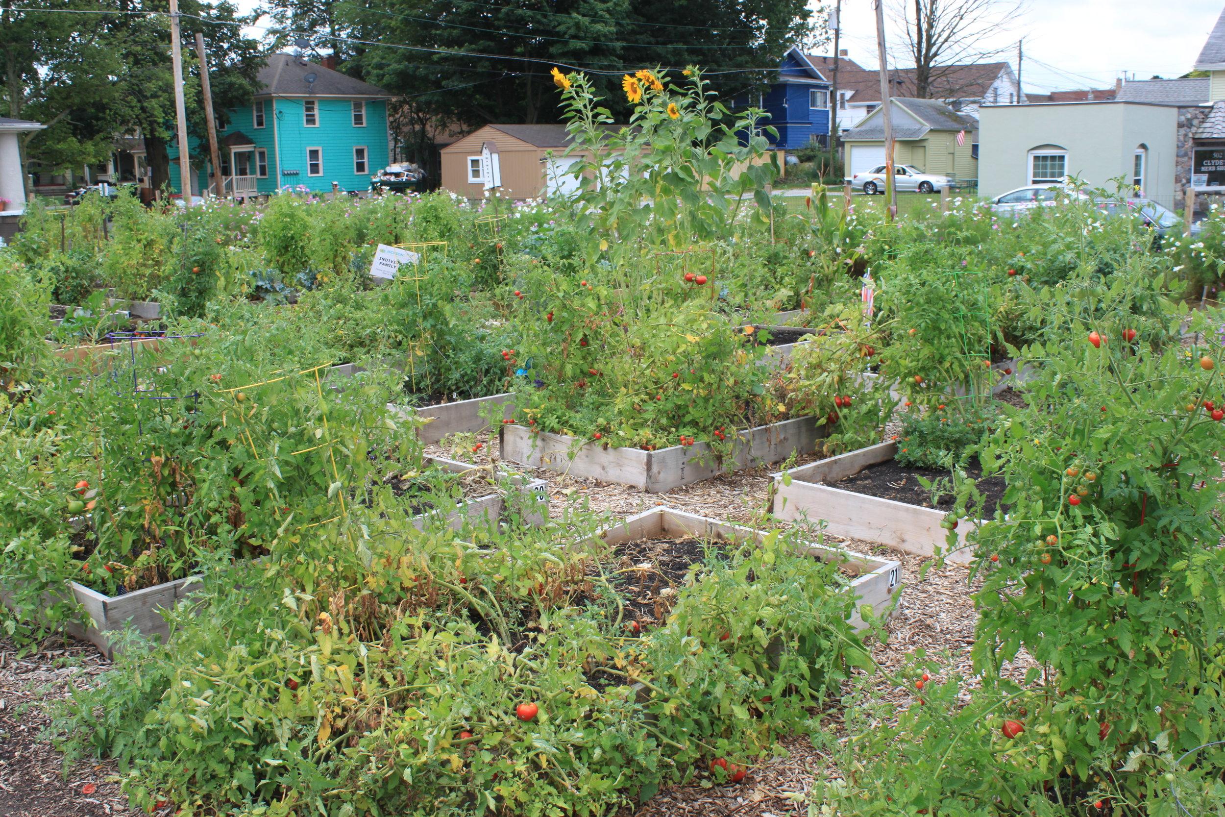 Master Urban Farmer Training Program - University of Illinois Extension & Purdue University Extension