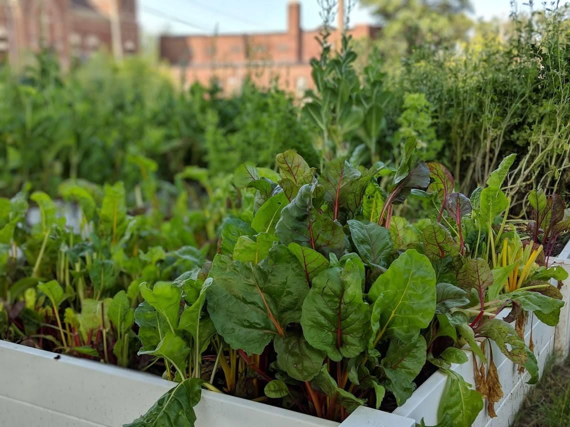 Urban garden at Sojourner Truth House