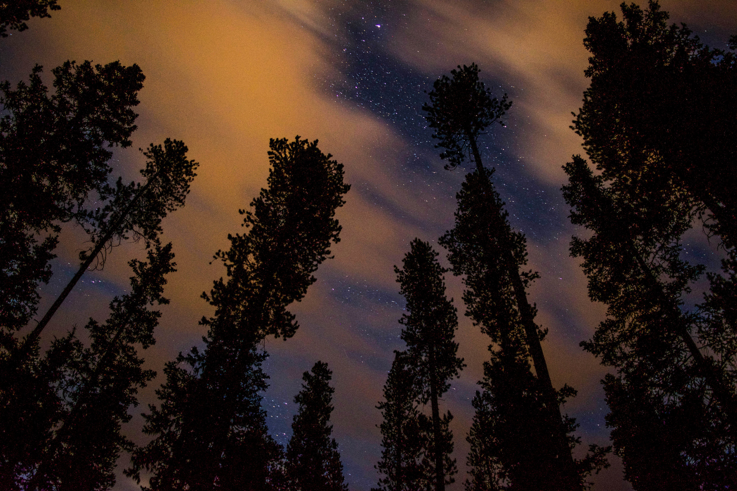 Unnaturally colored clouds pass over a pine forest in Banff, obscuring the countless stars.