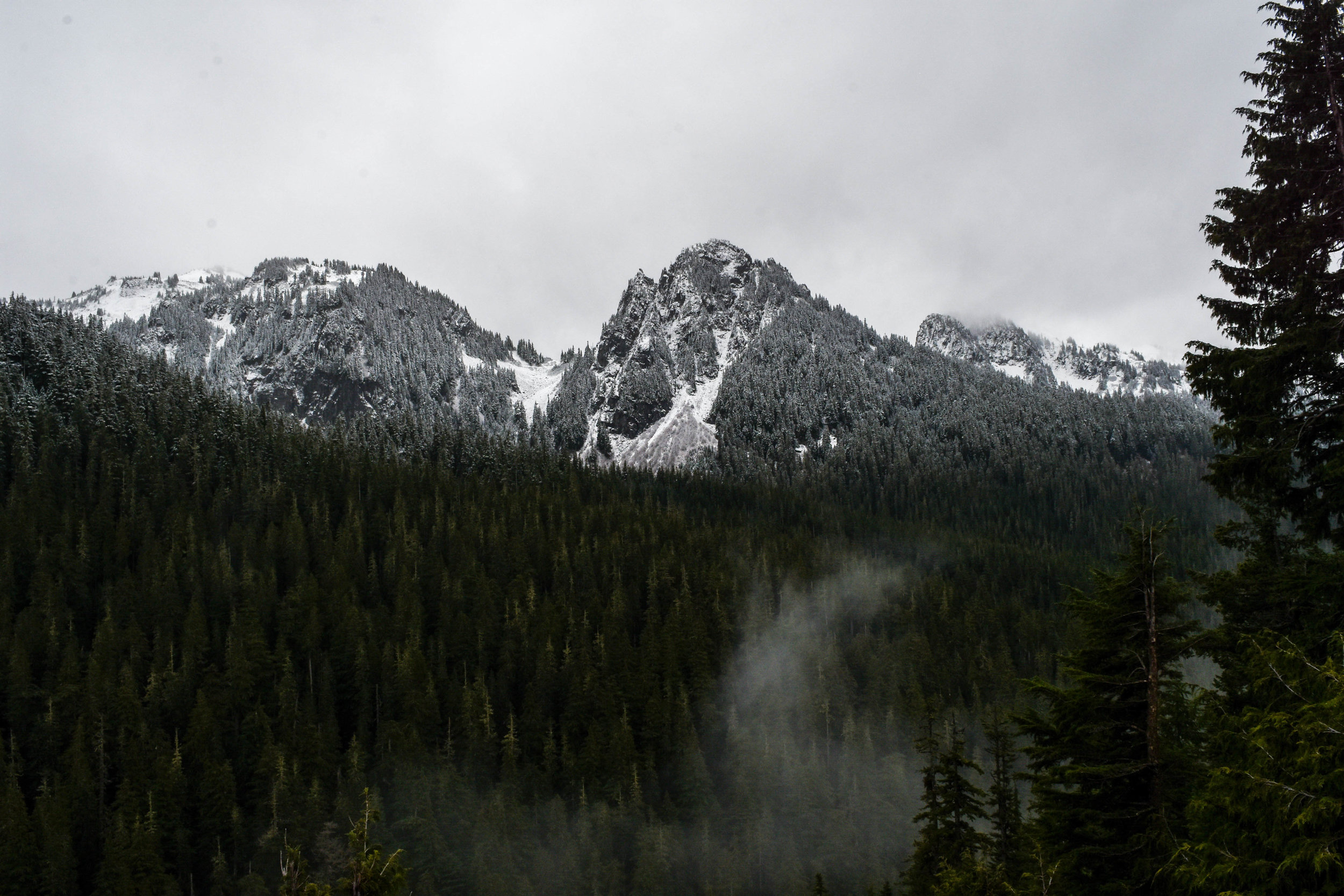 During the drive ascending Mt. Rainier, my friends and I stopped to gaze out over the slopes of nearby mountains, and marvel at the sharp contrast between the snow-covered alpine trees and those lower down that still lay bare.