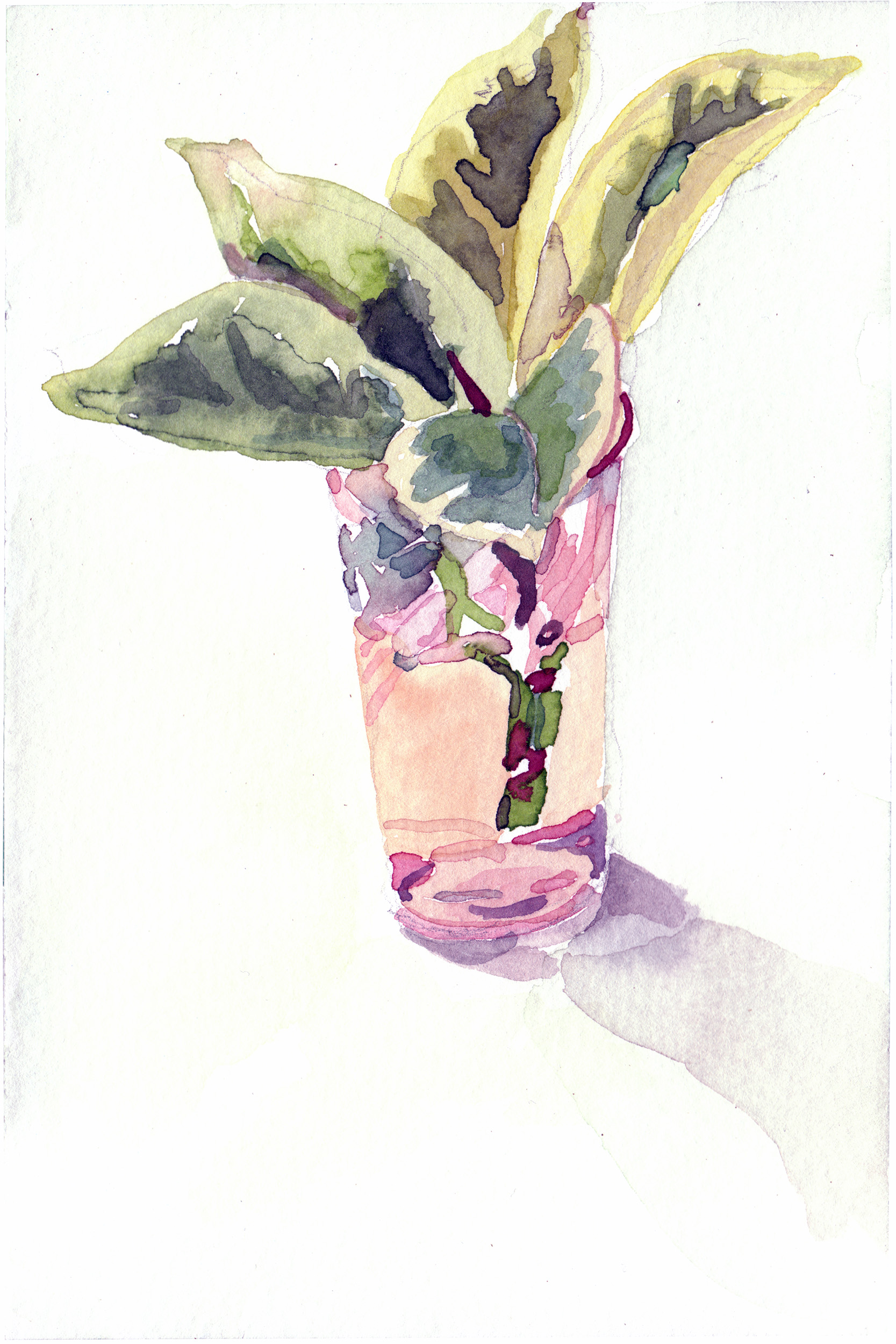"""2008. Plant in glass. 4 x 6"""""""