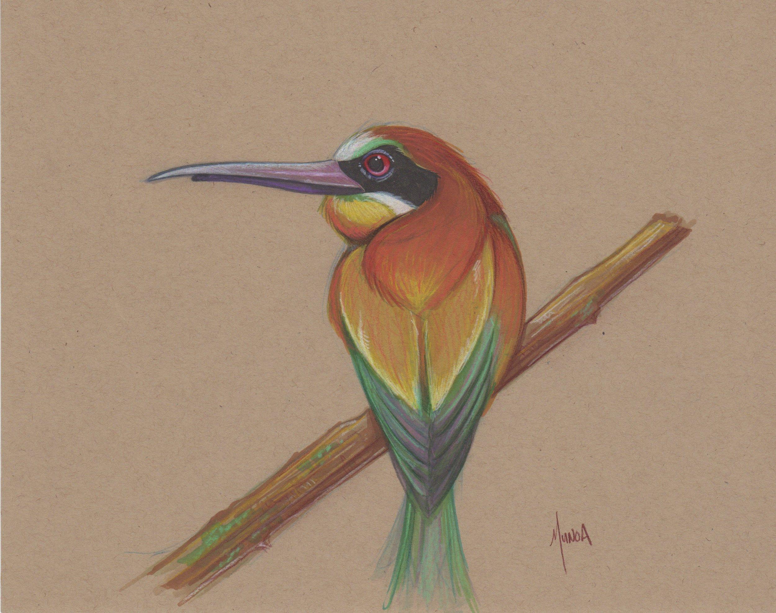 bee_eater_bird_sketch.jpeg