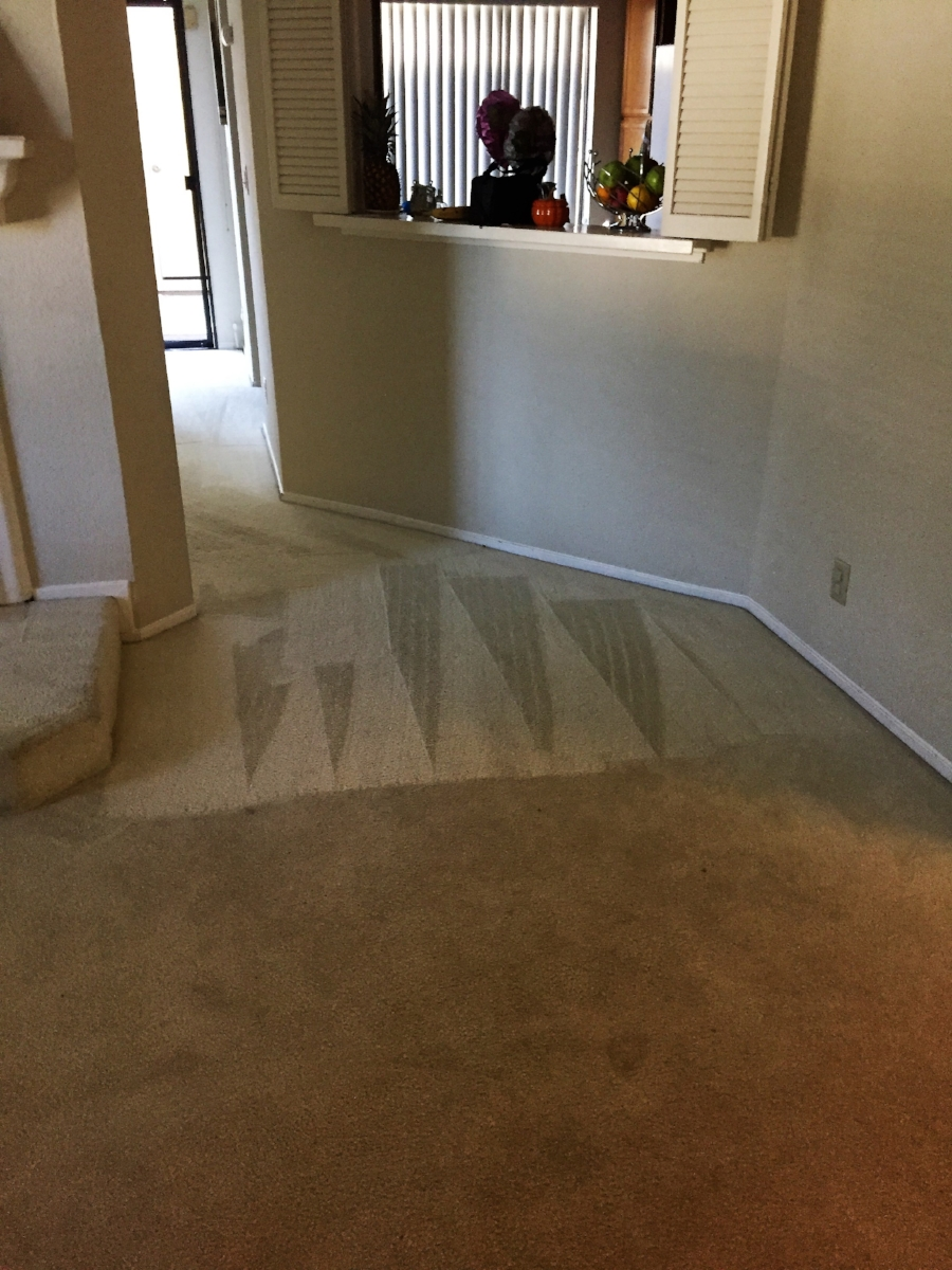 Residential Carpet Cleaning in Progress