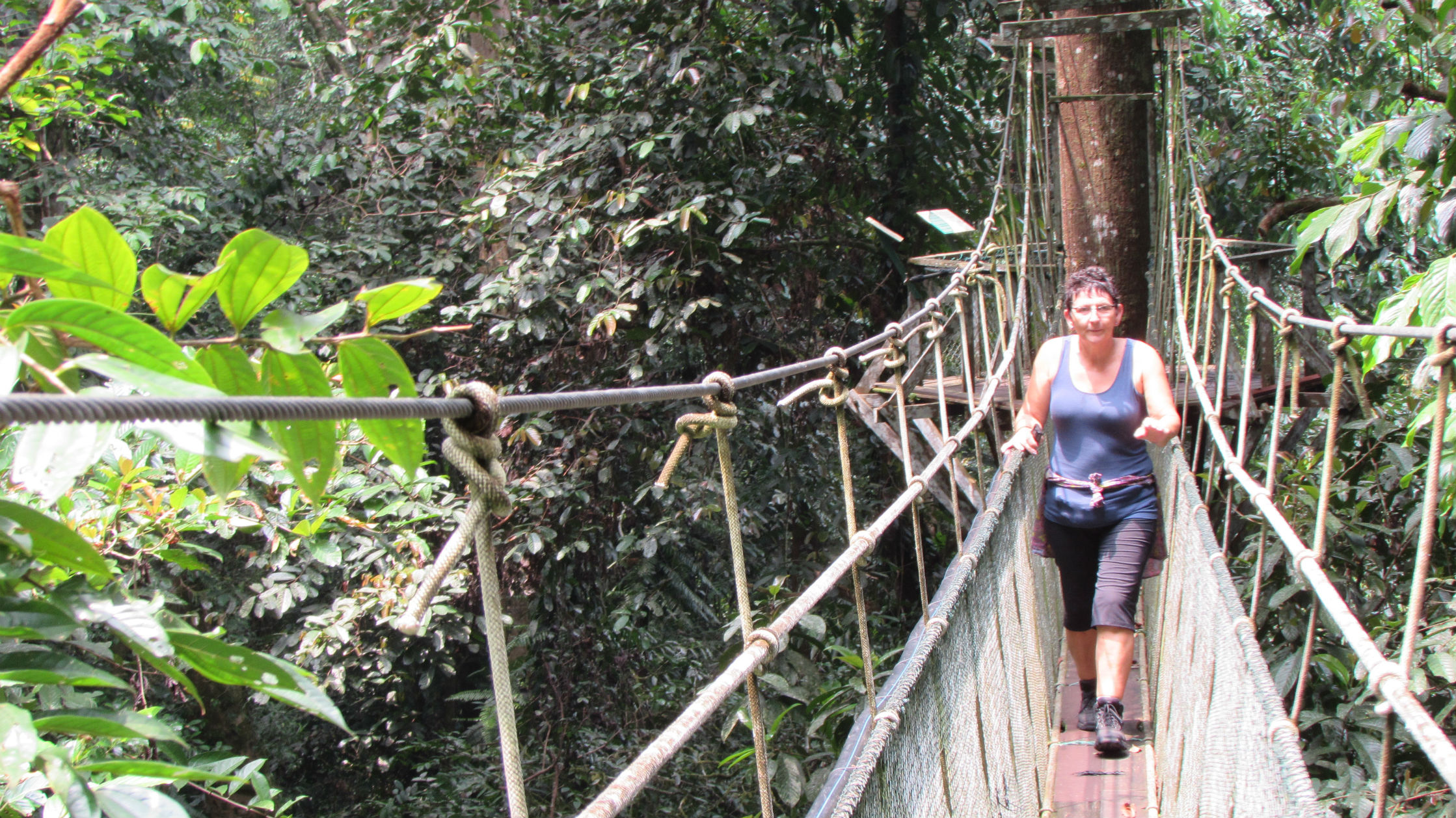 Canopy Bridge 25 meters above ground