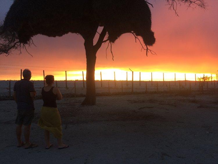 Winnie and Frank enjoying the sunset at Halali camp (huge colony of bird-nest in Acacia tree)