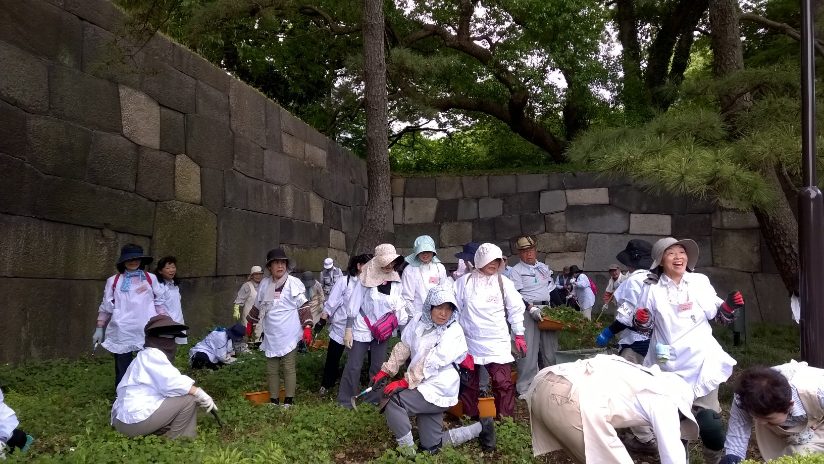 Volunteers cleaning the gardens of the Imperial Palace in Tokyo