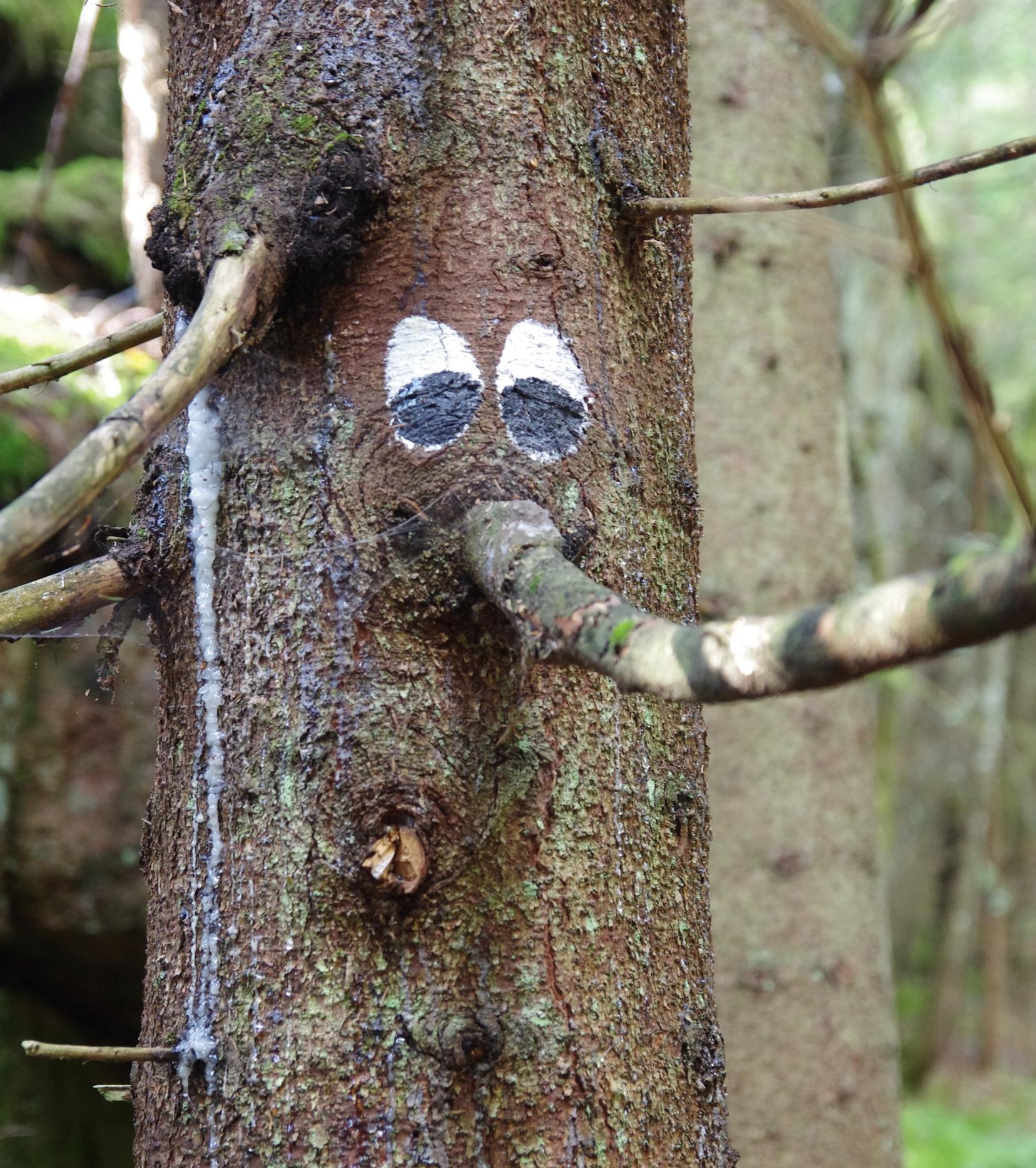 Øynene kan du følge halve turen. Kjempekjekt for barn å finne neste trolltre :)