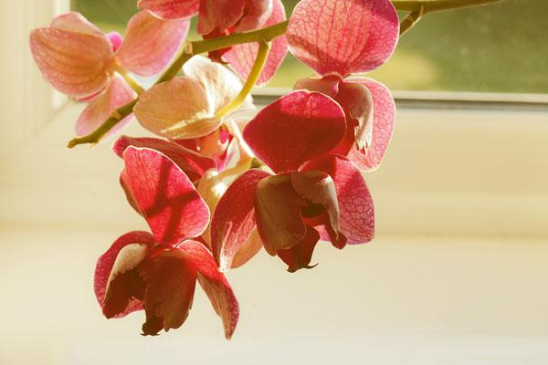 orchid detail.jpg