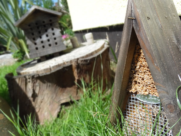 Our bug shelter