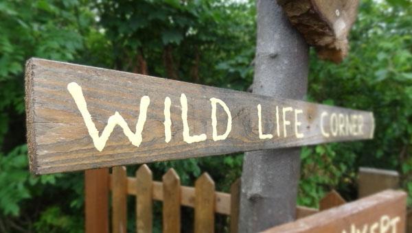 Our little wildlife corner...