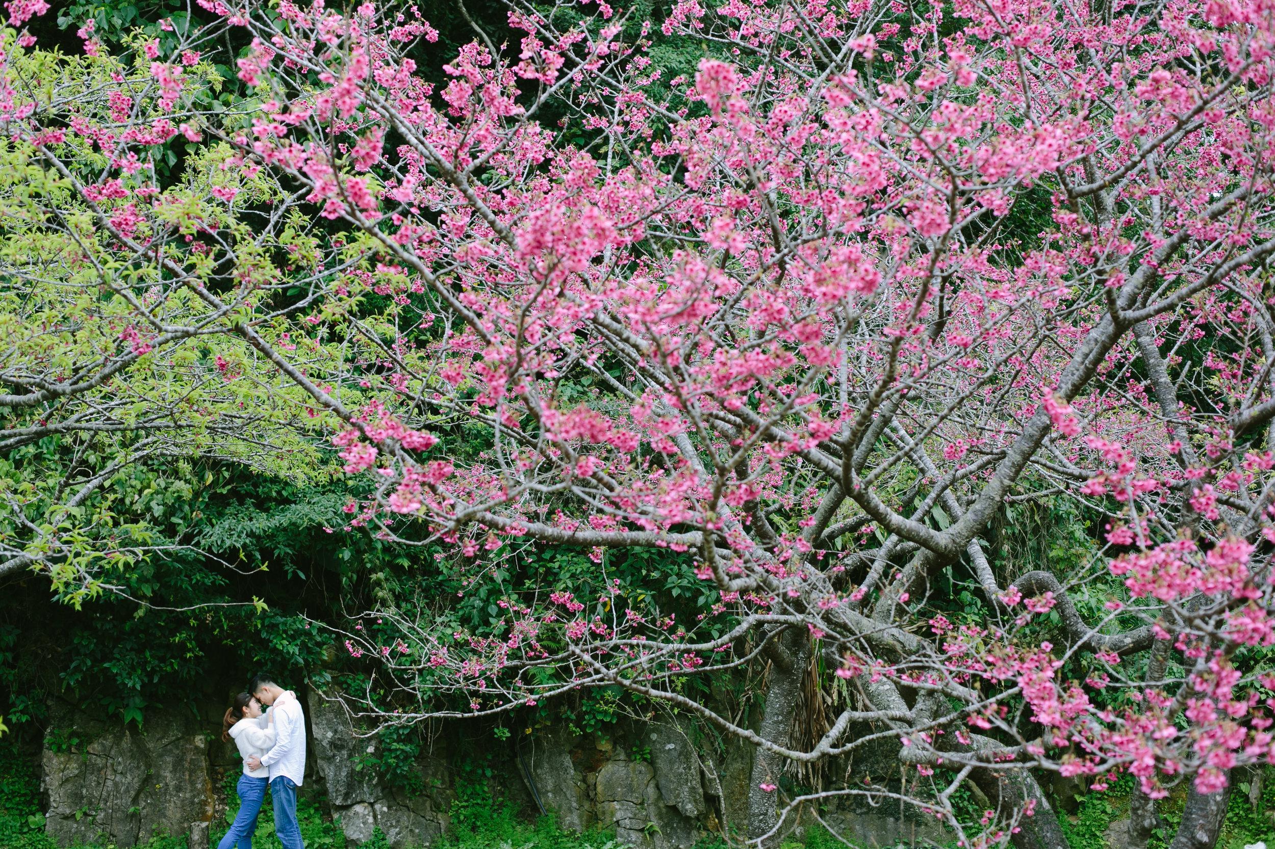 沖縄カップルフォト | 沖縄桜 | 出張カメラマン | Koji Nishida Photography