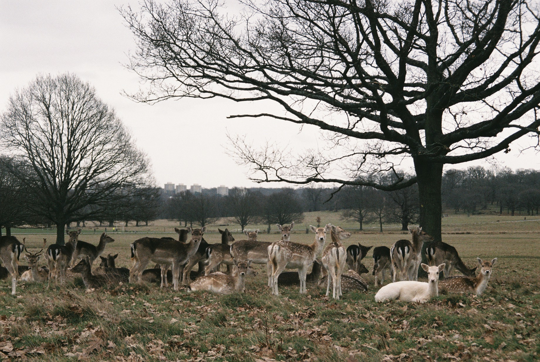 Richmond park.