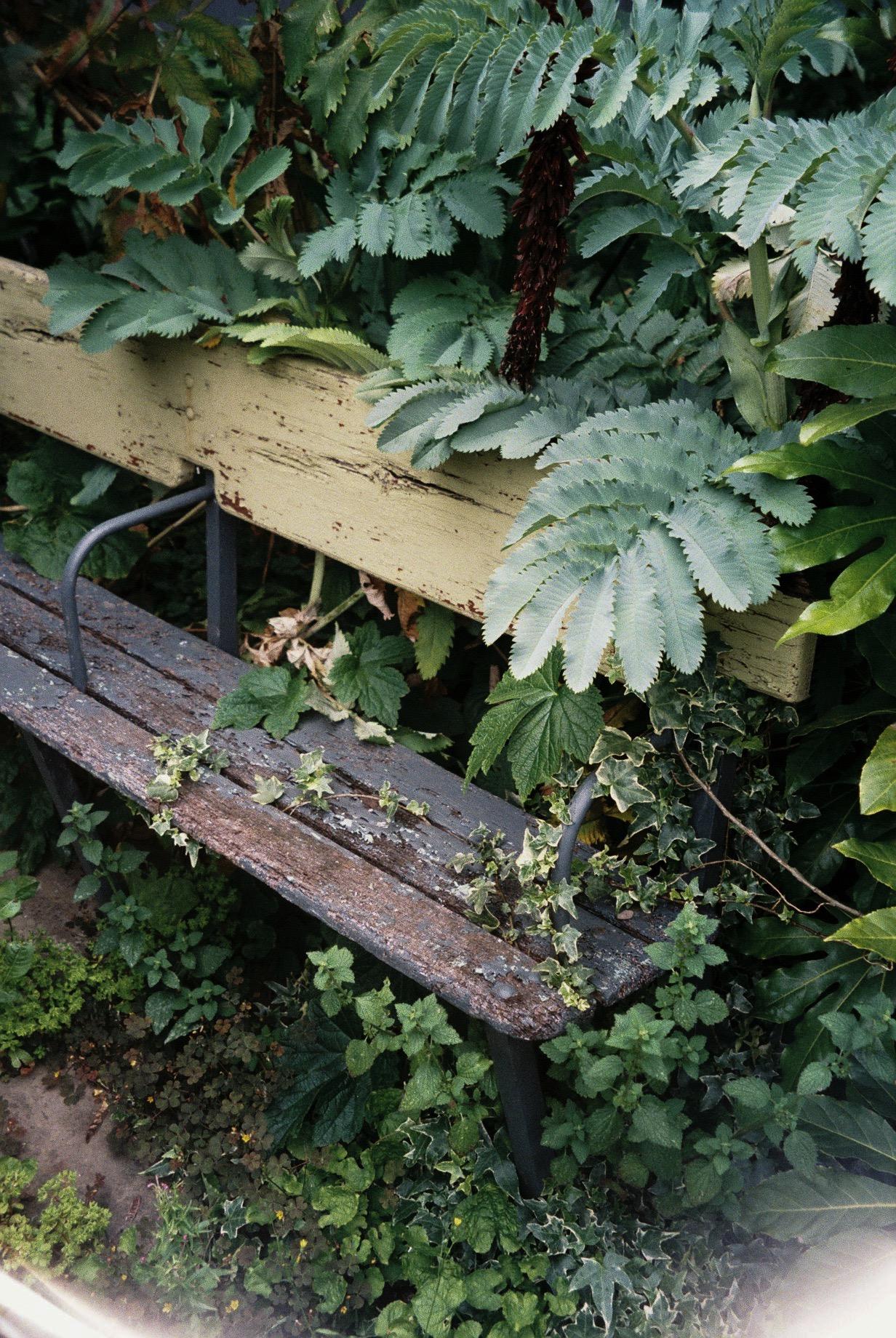 A bench being eaten by Mother Nature.  / Banco de rua em Hackney a ser comigo pela natureza.