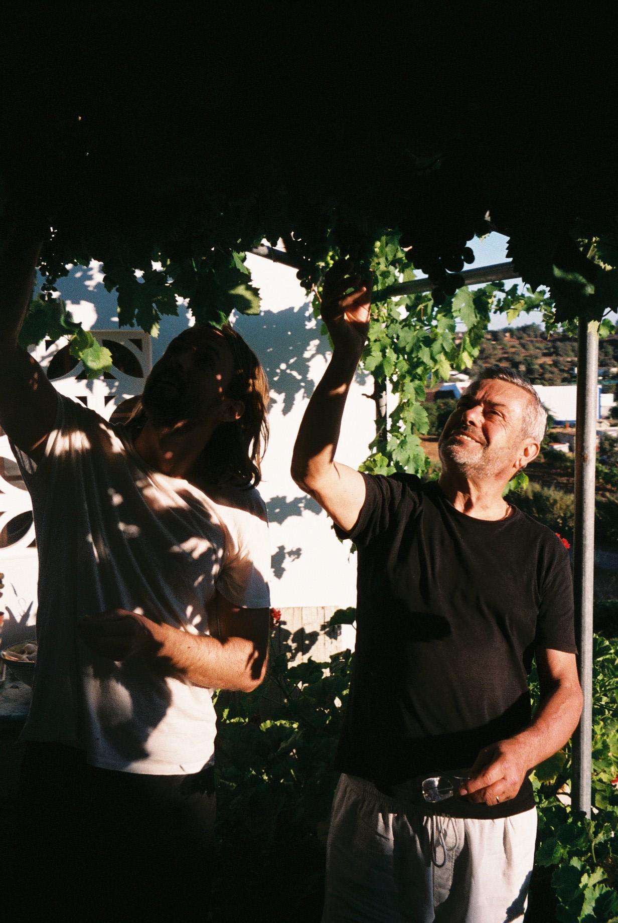 Martin appreciating my dad's grapes.  / O Martin a apreciar as uvas do meu pai.