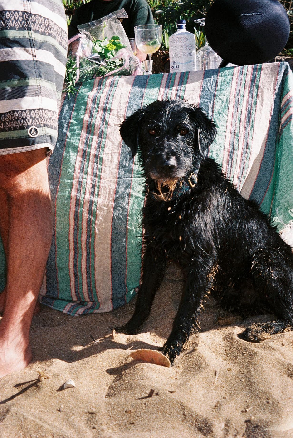 """My dear friend João Manzarra's dog called """"Maravilha"""".  / O cão maravilha do meu querido amigo João Manzarra."""