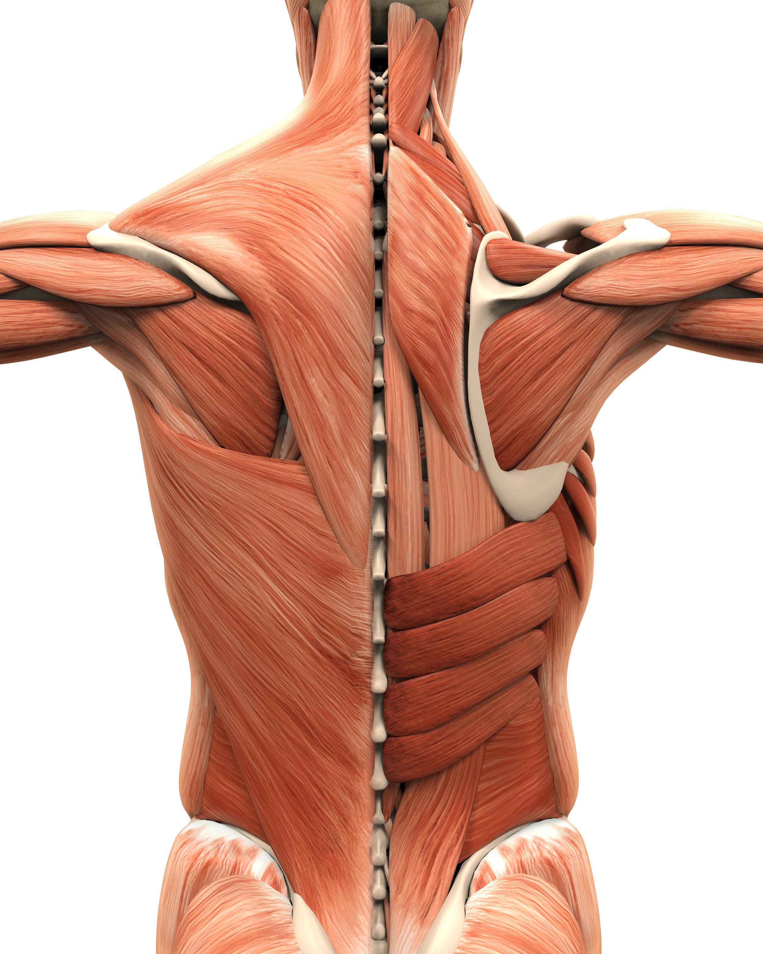 Four Tips for Shoudler Pain_Rotator