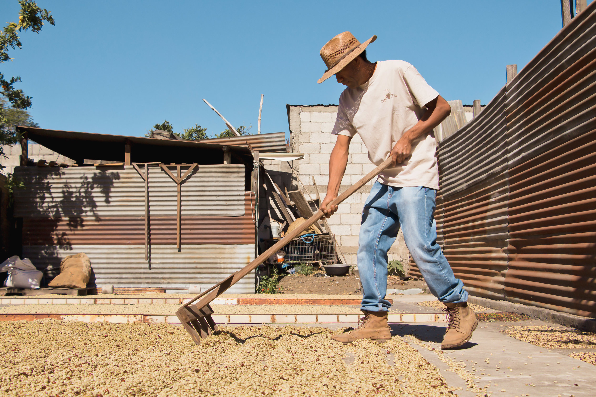 FELIX PORÓN MEDIO RAKES COFFEE BEANS ON HIS BACK PORCH TO ENSURE SUCCESSFUL DRIVING ON JAN. 18. THE MAJORITY OF THE COFFEE MAKING PROCESS IS DONE IN PORÓN AND EUGENIA'S HOME IN THE CITY OF SAN AMIGUEL DUEÑA, GUATEMALA.