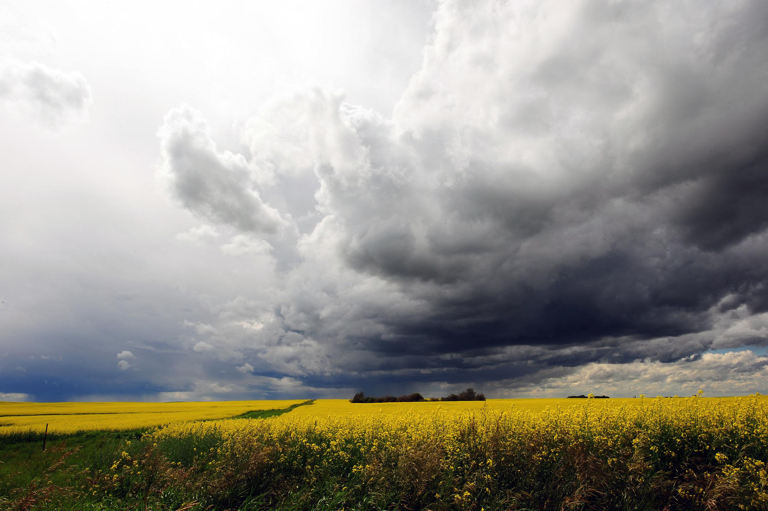 Summer Storm DSC_4458 8x12.jpg