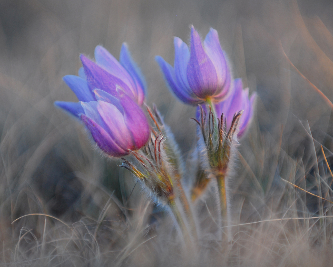 """Prairie Jewels""  DSC-0040"