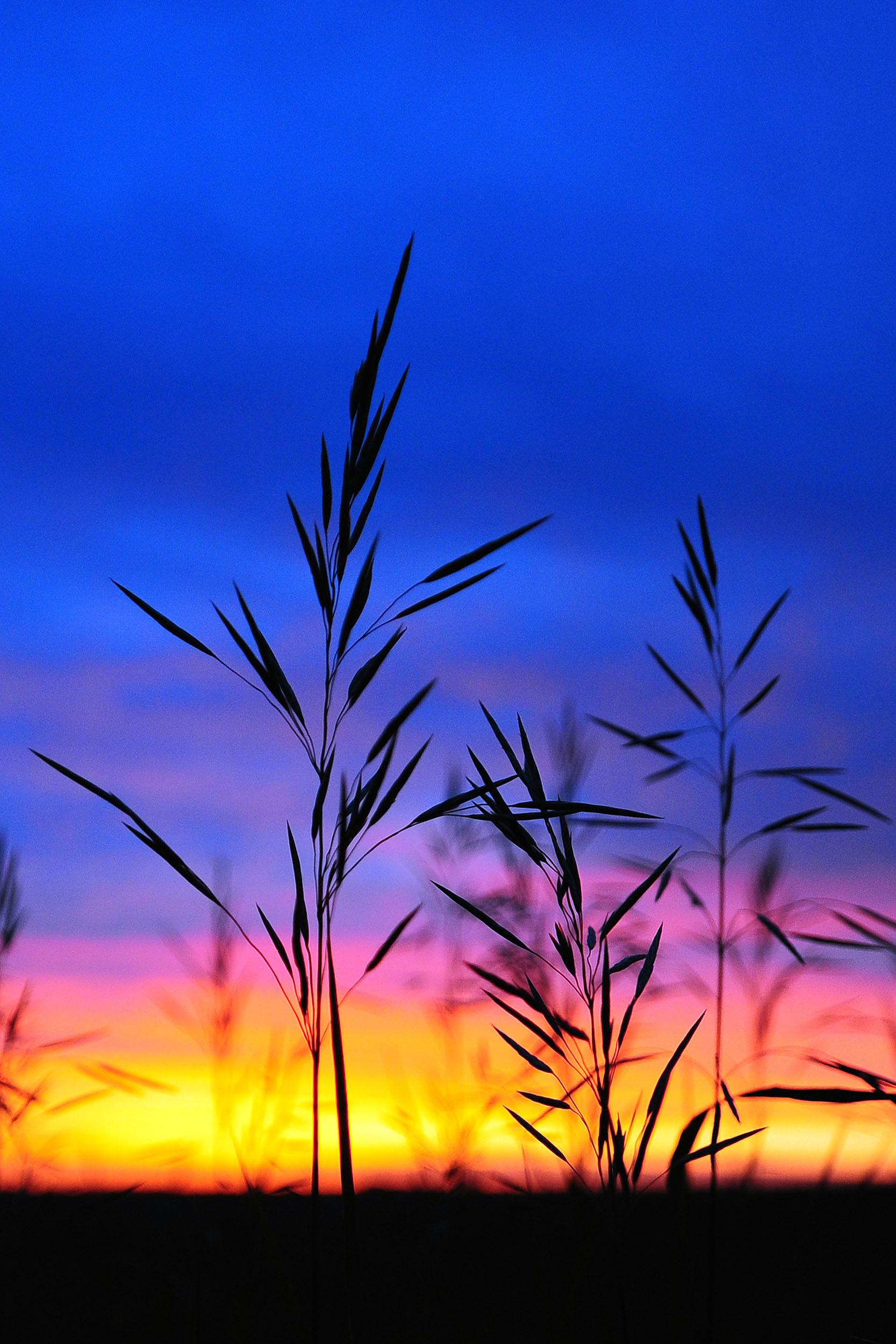 """""""Grasslands"""" - DSC_2536"""