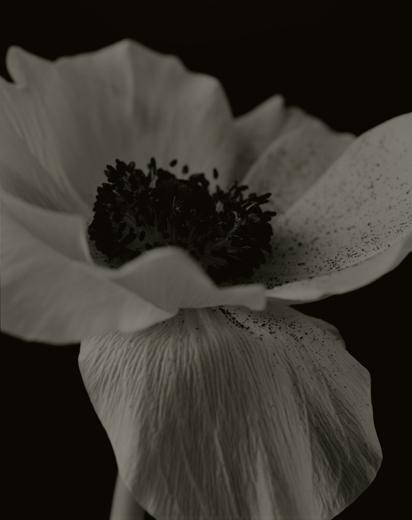 YUMIKO IZU,  Secret Garden (Noir) 18 , 2004
