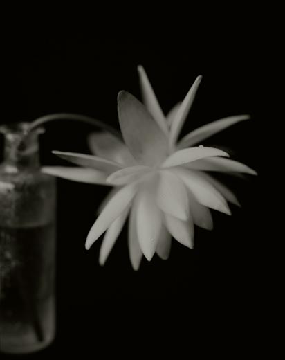 YUMIKO IZU,  Secret Garden (Noir) 35 , 2007