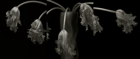 YUMIKO IZU,  Secret Garden (Noir) 48 , 2009